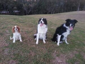 Happy Dog Walking Berala Auburn Area Preview
