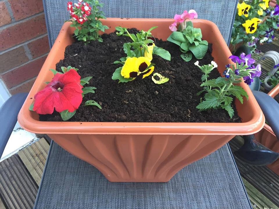 hanging baskets and garden planters | in Middlesbrough, North ... on