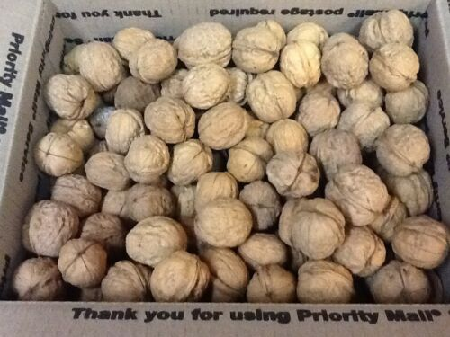 9.5 to 10 lbs California Chandler Walnuts In the shell Harvested Late Oct 2020