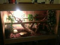 Jungle Carpet Python and Full Set up
