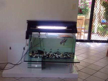 aquariam for sale Riverwood Canterbury Area Preview