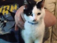 Male and female cats need new home urgently!