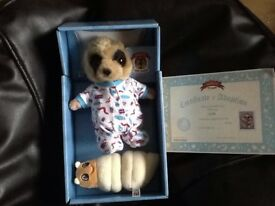 Boxed meerkat with certificate
