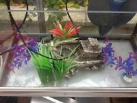 Fish tank with stand, plants, pump, ornaments readvertised due to timewasters