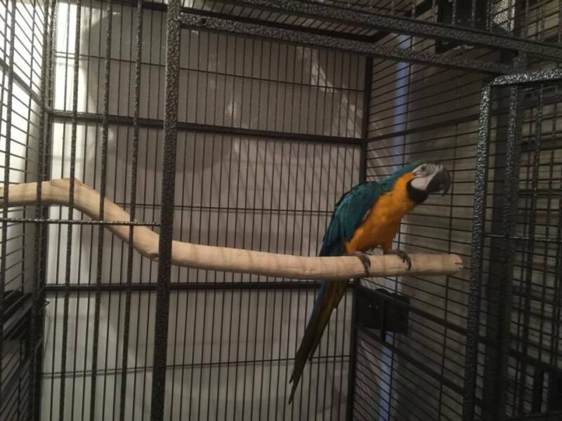 "Manzanita Parrot Perch for your 40"" Bird Cage!!! HOT!!!!"