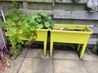 Elho raised planter (green)