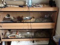 2corn snakes and vivarium