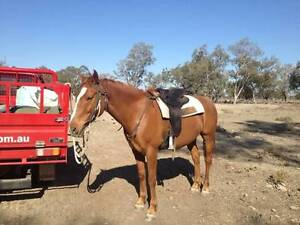 Going Droving Pty Ltd Lightning Ridge Walgett Area Preview