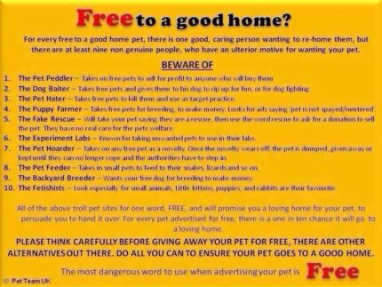 Free cats and dogs Maitland Maitland Area Preview