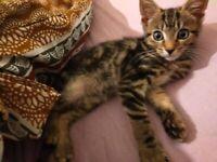 12 week old male kitten, beautiful eyes