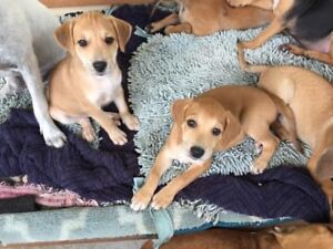 2 8-week old puppies for adoption!