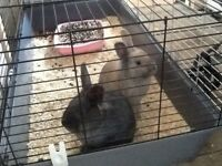 gorgeous friendly male rabbits