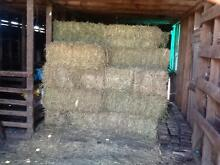Hay for sale. Small Squares Lucerne/Rye. 3rd cut - in shed. East Gippsland Preview