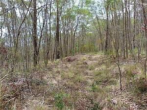 47 Acre Bushland Block - DRAKE NSW Kyogle Kyogle Area Preview