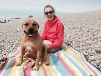 CLIFFORD DOGS: Dog walker and pet sitter in Bath and Bristol