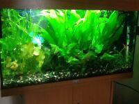 100 liter Jewel fish tank