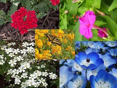 Florida   Gulf Coast Wildflower Mix  400 Thru 1Lb Seeds  Deep South Flowers   22
