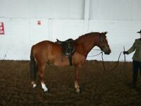 Stunning 2nd Pony For Sale