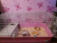 LOOKING FOR A HOME FOR MY MOTHER AND DAUGHTER GUINEA PIGS