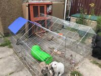 3 young female rabbits, cage (thermal cover) and two runs