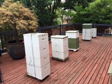 Bee Hives For Sale Eltham Nillumbik Area Preview
