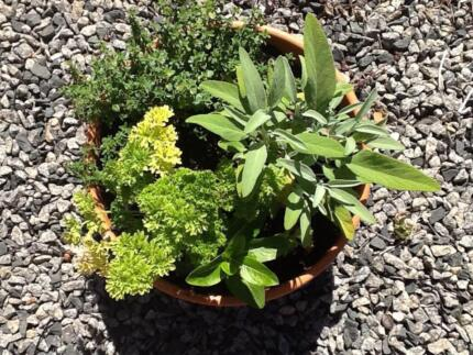 Garage sale collectables and potted herbs gifts
