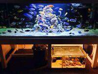 Fish tank 900lt 6wx2hx2.5d