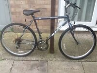 Lovely magna biki in great ondition £40 can deliver any time for petrol26 wheel20 frame10 gears