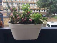 Lovely & Lightweight white flowerpots