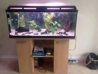 Marina 160 fish tank