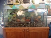 Fish tank with stand and lid 3ft x 1 ft
