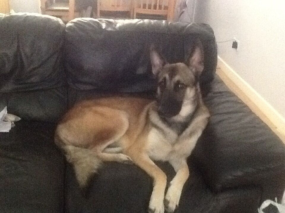 Dogs Free Good Home Middlesbrough