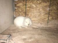 Rabbit & indoor cage