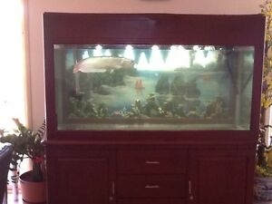 Brazil silver Arowana with complete large fish tank Gawler South Gawler Area Preview