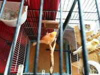 Lovely canary for sale