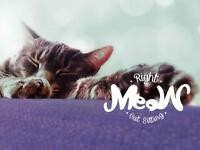 PERSONALIZED CAT SITTING SERVICES IN FREDERICTON