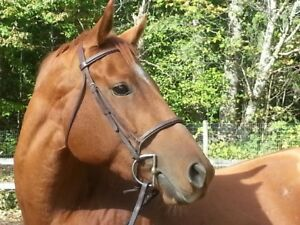 3 Y/O Thoroughbred Filly