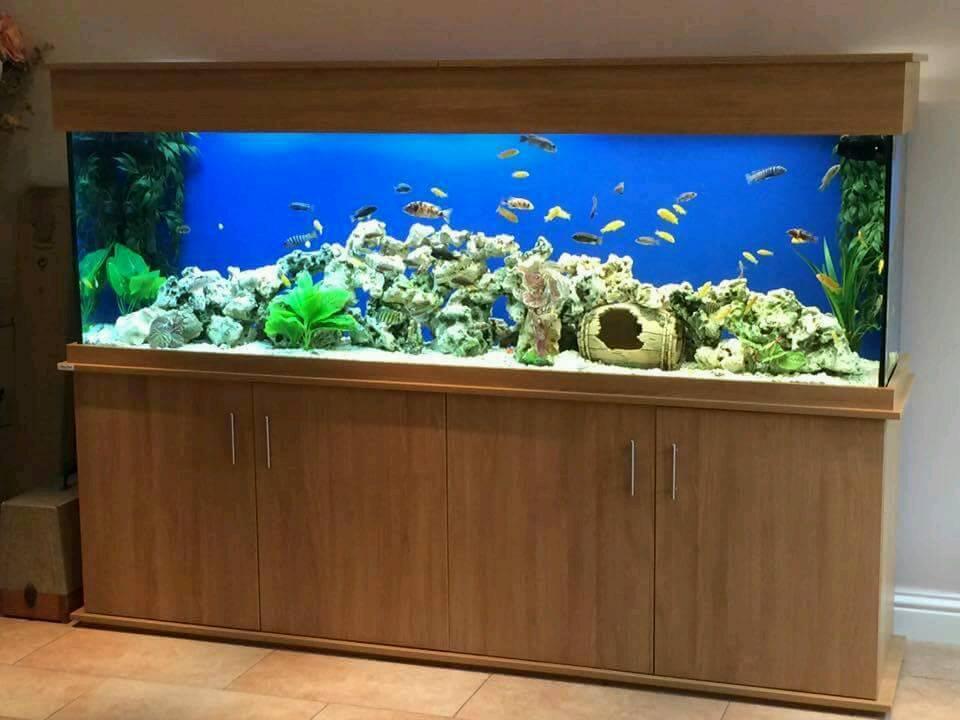 Custom fish tank