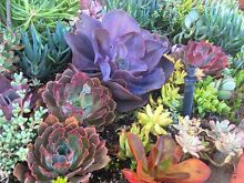 SUCCULENT TRADE DAY Ipswich Ipswich City Preview
