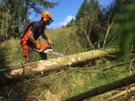 The Tree Warriors. Professional Arborists.