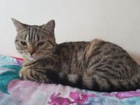 Lost Cat - Charminster, Bournemouth