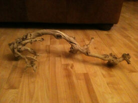 Large Vine Root Wood - Ideal for Vivarium, Rats and Degu