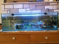 Fish Tank 2 and half foot