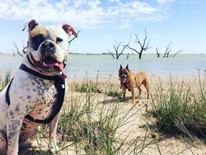 Dog Sitting Inverell Inverell Area Preview