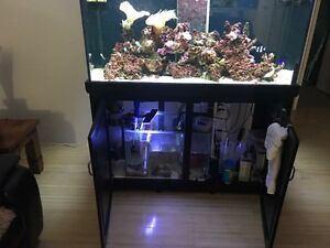 Aqua one marine tank *urgent sale* Jindalee Wanneroo Area Preview