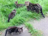 6 kittens for sale 4 girls 2 boys
