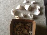 Box Of Shells