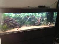 5ft aquarium with extras
