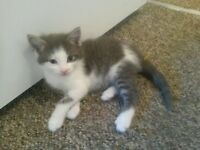 4 kittens looking for their forever home