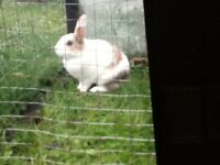 Here I have to rabbits for sale